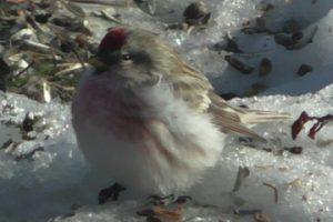 2015-02-28 Snösiska